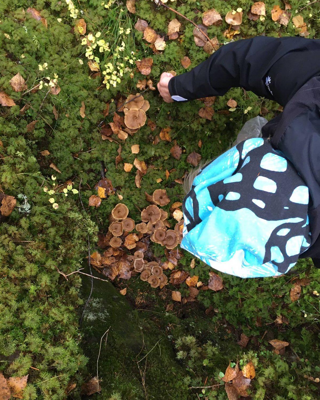 Syysretki 2021 - Suppilovahveroita Pukalan sienimetsässä.